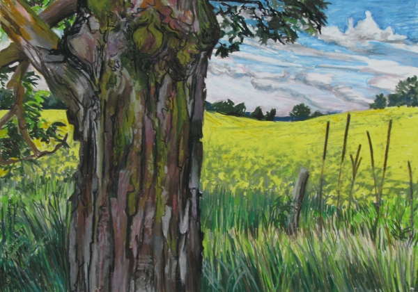 Canola Field and Maple Tree 19.5 x 27.5